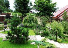 Ландшафтный дизайн и озеленение сада: