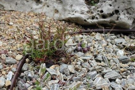 Крошка Кора каменная